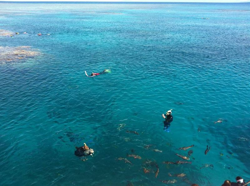 Snorkelling and diving on the Great Barrier Reef