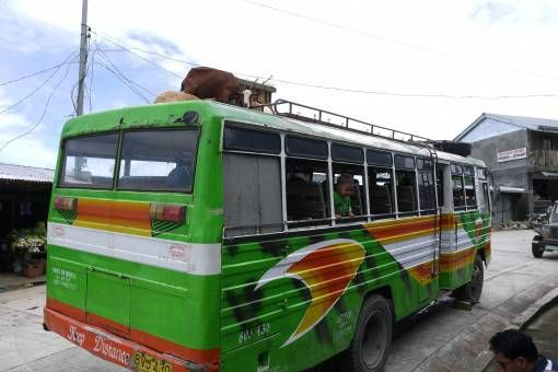 Goats on a Bus in the Philippines