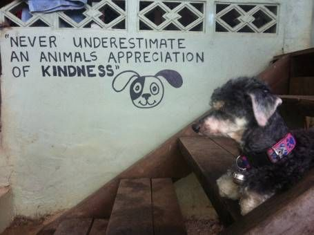 The Dog Rescue Project, Thailand