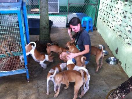 Volunteering at the Dog Rescue Project, Thailand