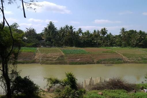 Vegetables by the River in Battambang, Cambodia