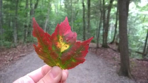 A red fall leaf in New England, USA