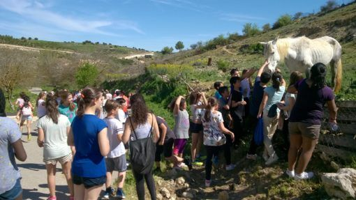 Kids petting a horse on school camp in Spain