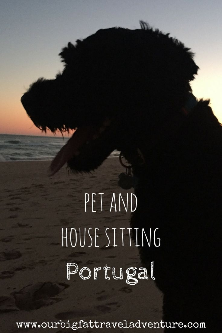 Pet and house sitting Portugal Pinterest Pin