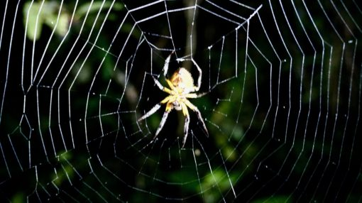 Spider in its web on a night walk in the Amazon rainforest, Bolivia