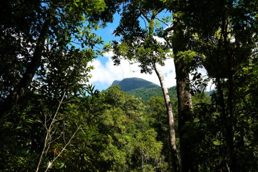 The ancient Daintree Rainforest, one of many Queensland highlights