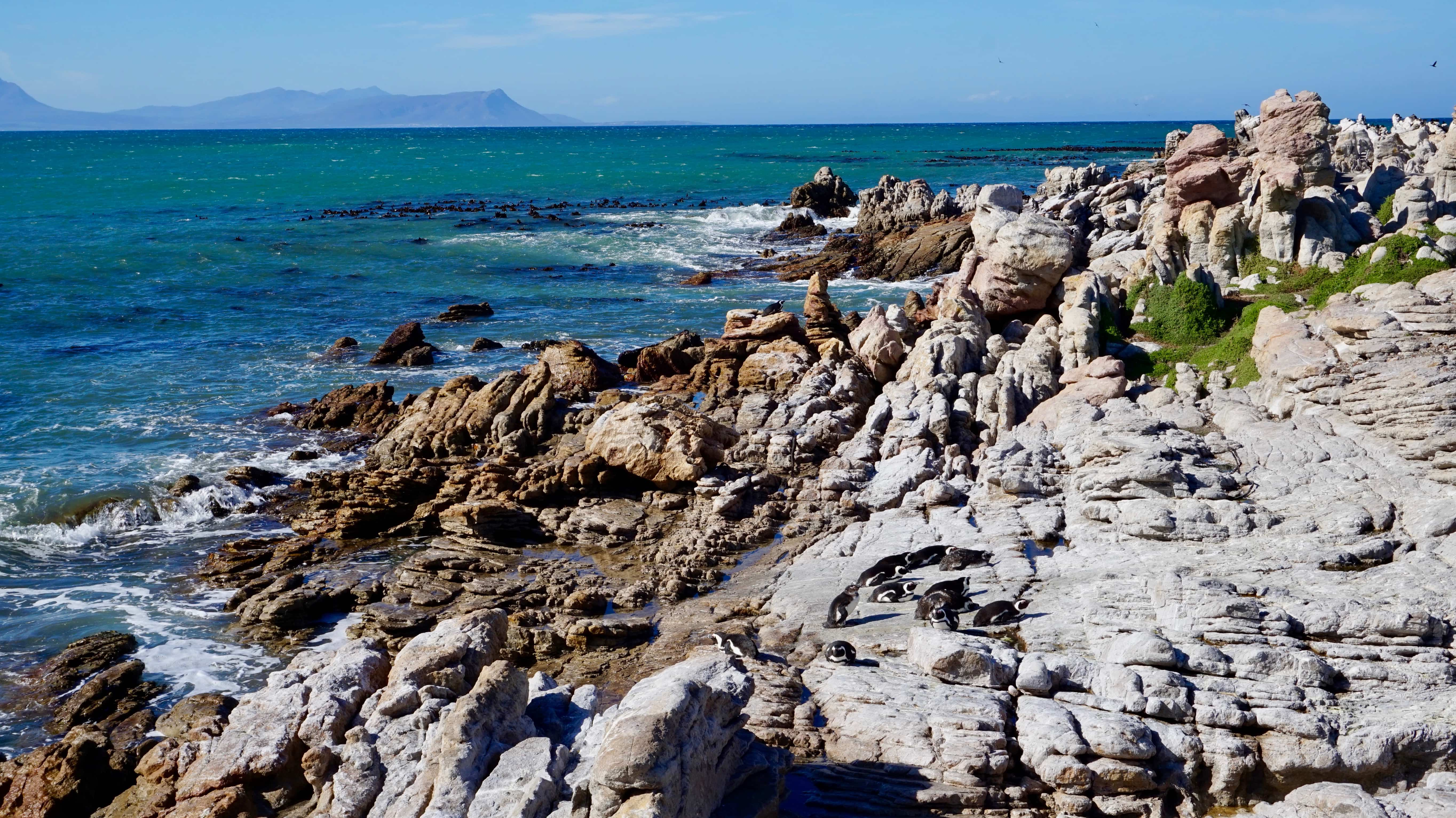 Betty's Bay, first stop on our Garden Route road trip itinerary