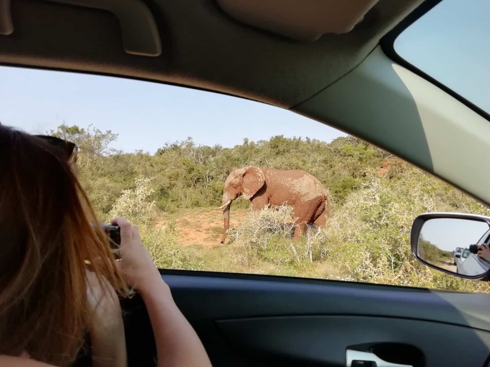 Taking pictures from the comfort of your own vehicle in Addo Elephant National Park, South Africa