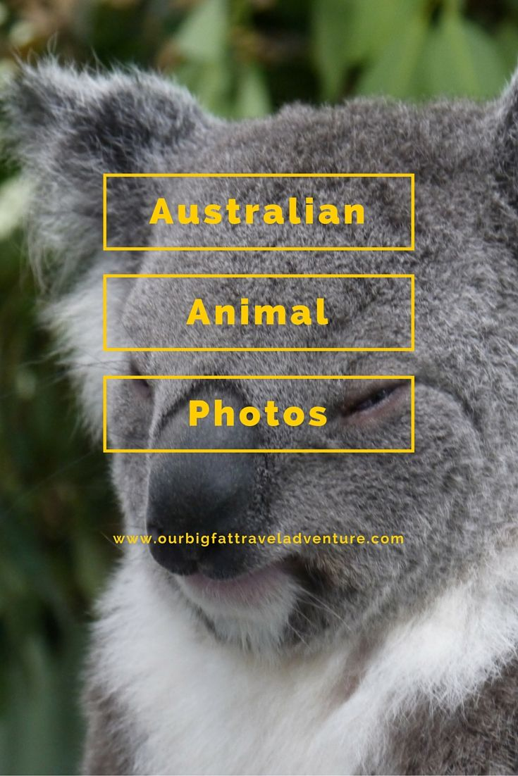 Australian Animal Photos