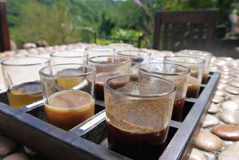 Tea and Coffee Samples at a Bali Plantation