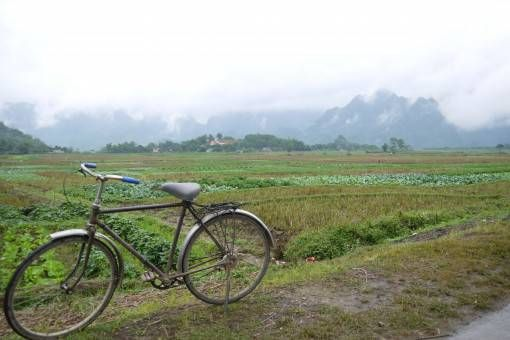 Bicycle and Rice Paddies in Vietnam