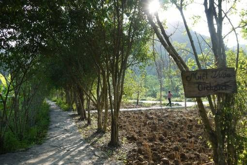 An orchard in Bird Valley, Tam Coc