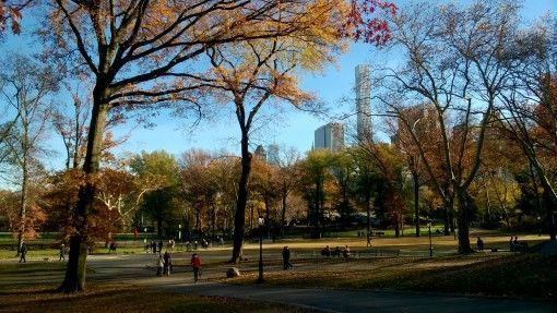 Beautiful autumn leaves in Central Park, New York