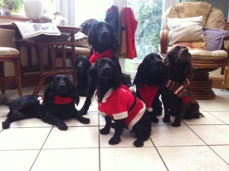 Dogs in Christmas outfits
