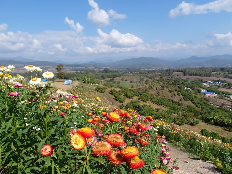 Lun Yai viewpoint in Pai Thailand, with wild flowers