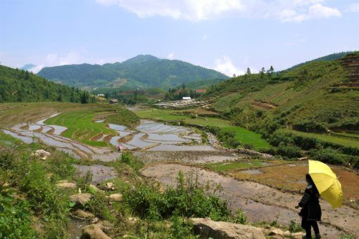 Sapa rice fields in the summer, Vietnam