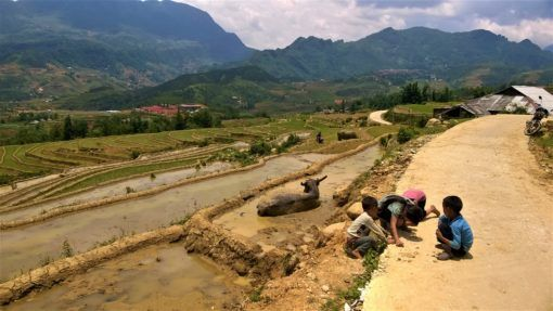 Buffloes and children in rice fields of Sapa in Vietnam