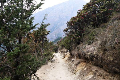Trees, flowers and plants on the Everest Base Camp Trek