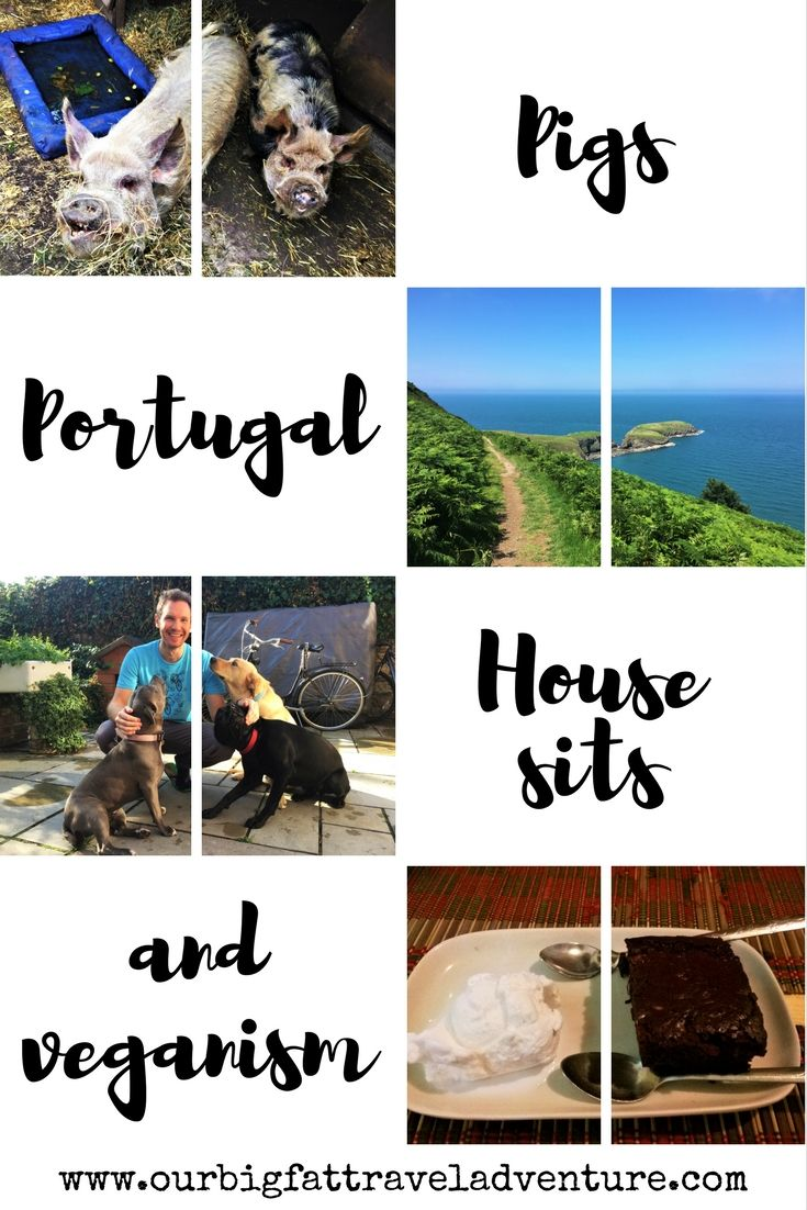 We're back in Europe for a few months looking for house sits, caring for pigs and transitioning to a vegan lifestyle - here's how it's going.