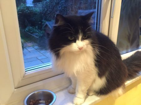 Duchesse the cat we looked after on a London house sit