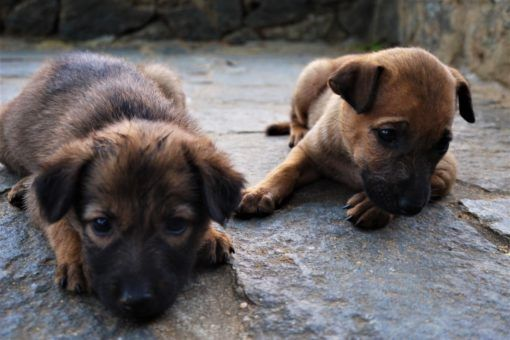 Puppies in the street in Polonnaruwa in Sri Lanka