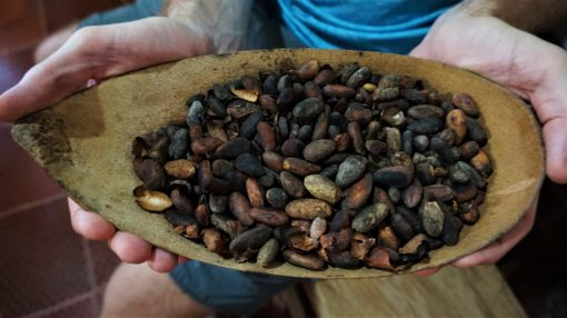 Roasted cacao beans in Minca, Colombia