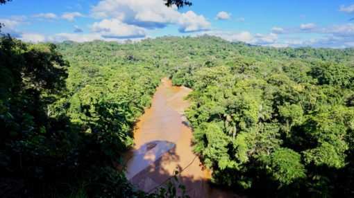 View of the Amazon rainforest and a river running through it near Rurrenabaque in Bolivia