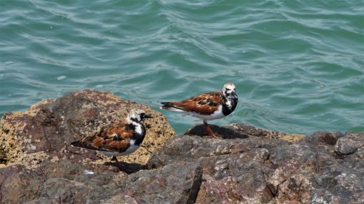 One of the many sea birds at Paracas National Reserve