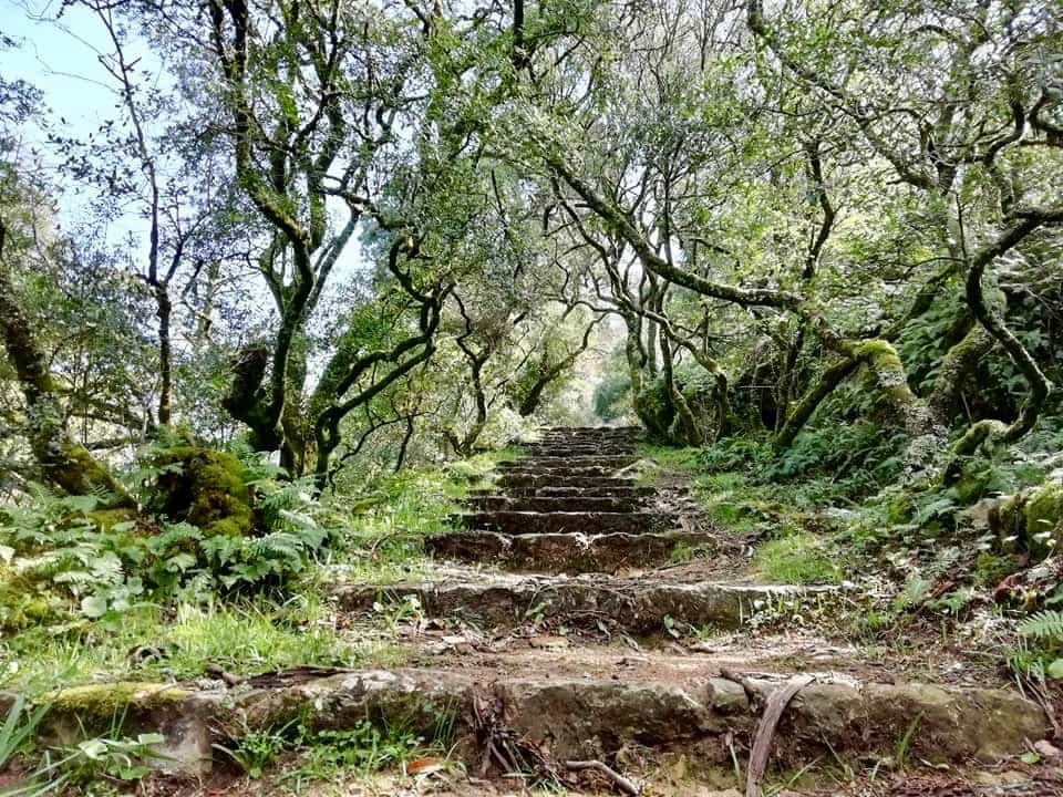 Stairs surrounded by trees in the Bussaco Forest, Portugal
