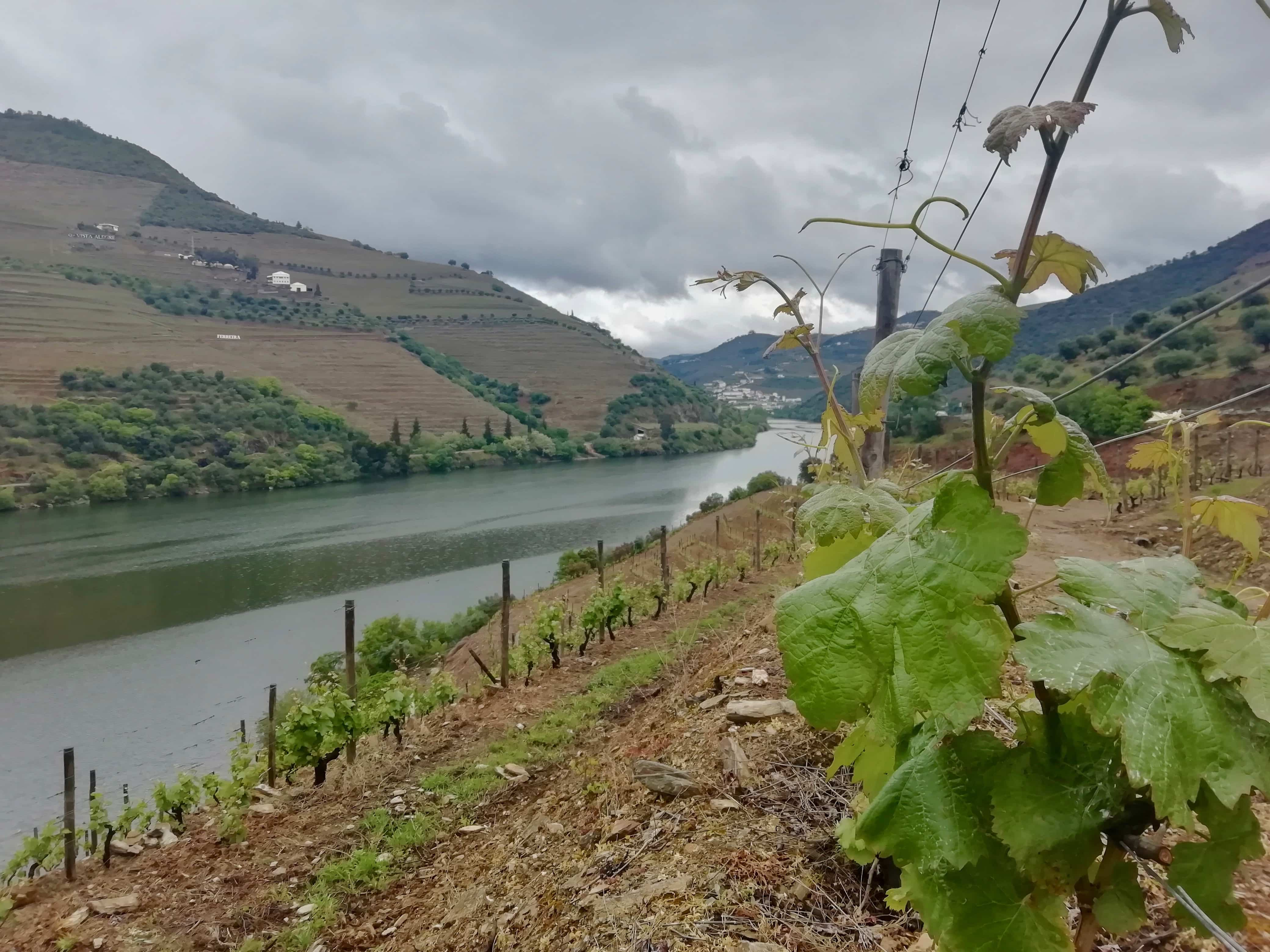 Vineyard in the Douro Valley, Portugal