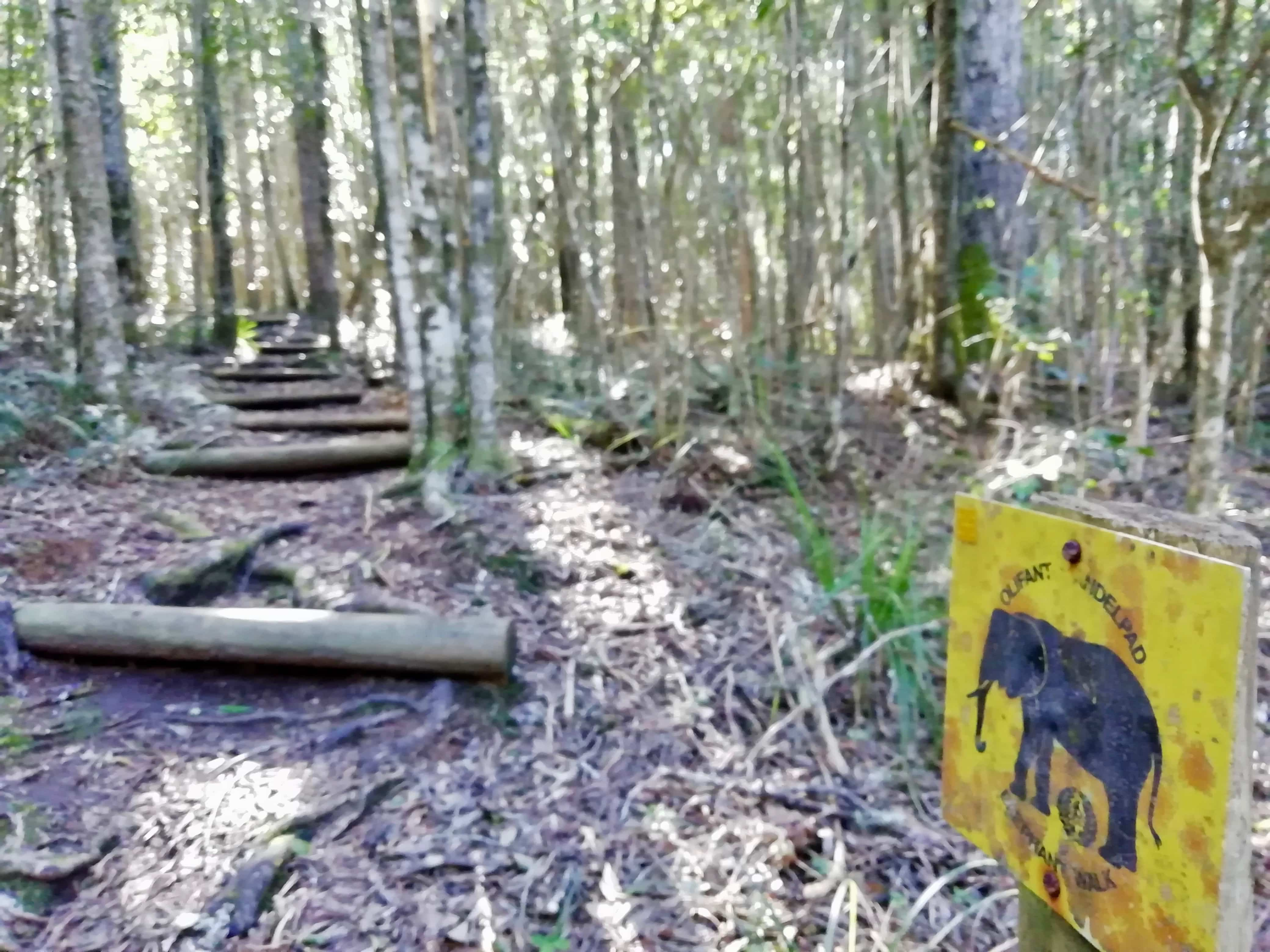Black Elephant Loop hike at Diepwalle Forest Station, Garden Route