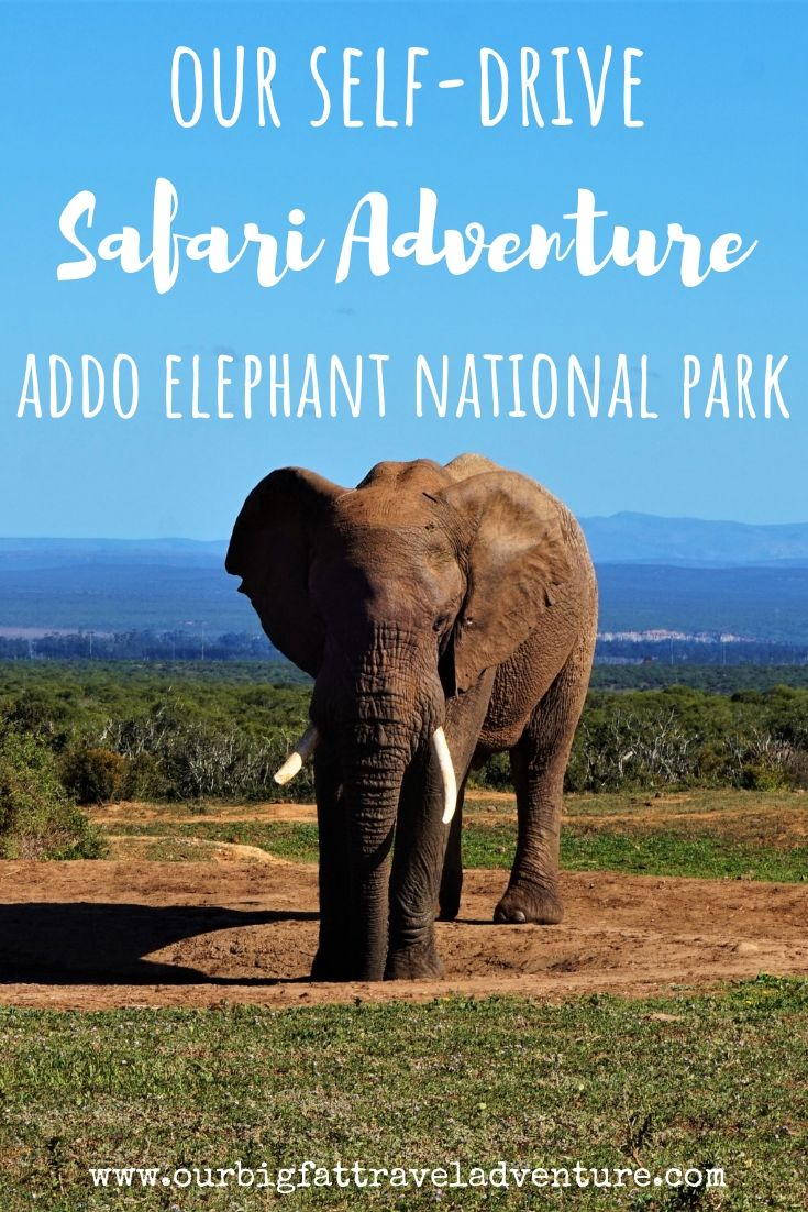 Our Self-Drive Safari Adventure at Addo Elephant National Park, Pinterest Pin