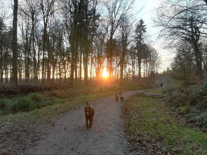 Dog walk in Hampshire